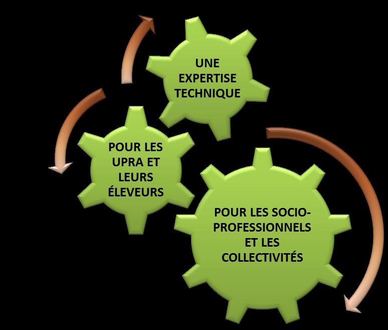 UCS schema 1
