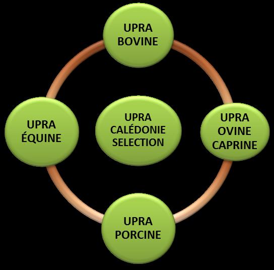 UCS schema 2