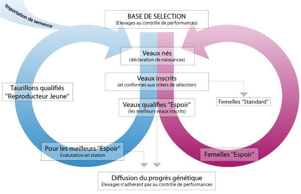 schema-selection